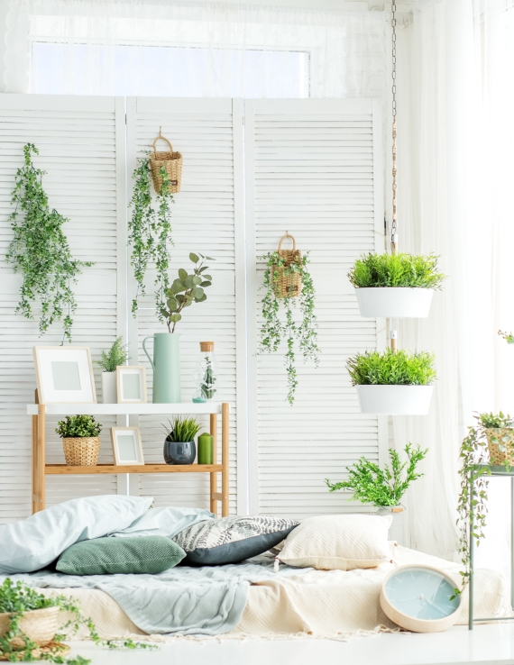 univers jardinerie plantes intérieur
